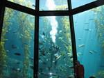 Aquarium_1_1